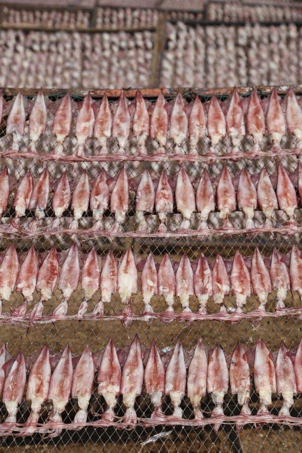 De pijlinktvis legt op netto, Droge Pijlinktvis, traditionele pijlinktvissen die in de zon in een idyllisch vissersdorp drogen, T royalty-vrije stock fotografie
