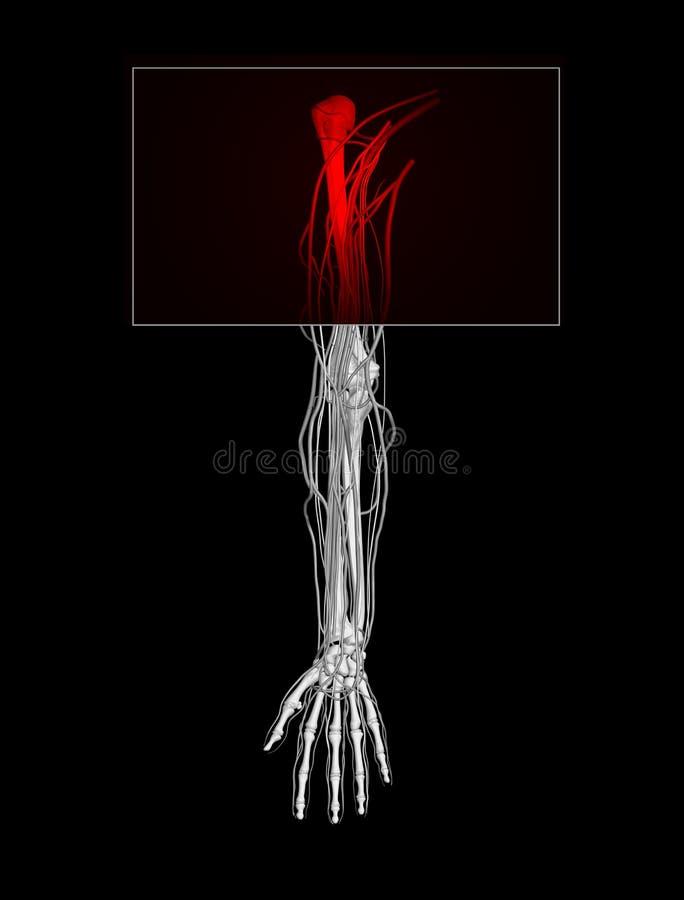 De Pijn van de schouder stock illustratie