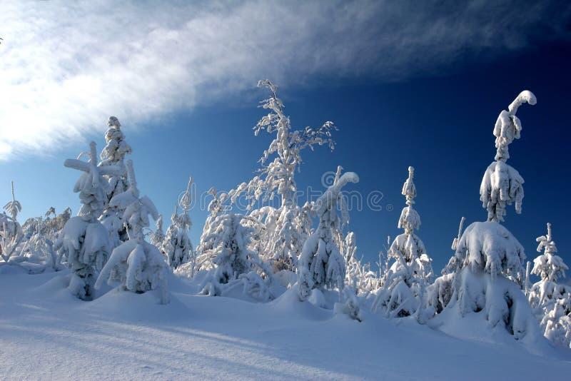 De pijnbomen behandelden de sneeuw stock afbeeldingen