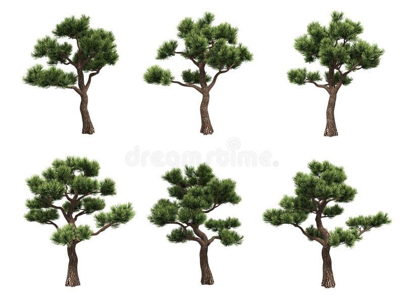 De pijnbomen van de bonsai vector illustratie