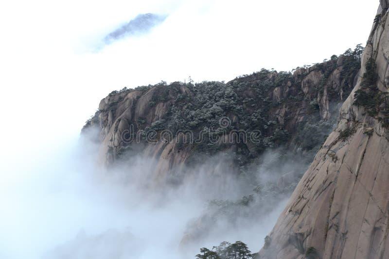 De pijnboom door sneeuw, berg wordt behandeld wordt belemmerd door het overzees van wolken die royalty-vrije stock foto
