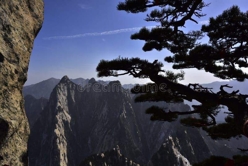 De pijnboom en de berg royalty-vrije stock afbeelding