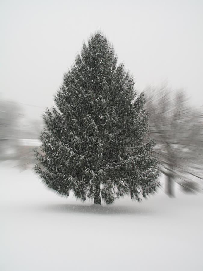 De Pijnboom Van De Blizzard Stock Afbeeldingen