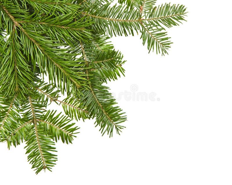 De pijnboom van Kerstmis royalty-vrije stock fotografie