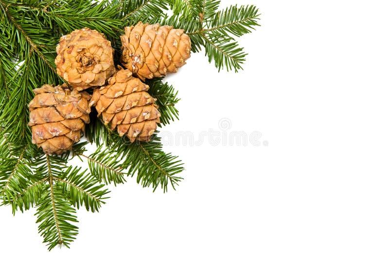De pijnboom van Kerstmis en drie kegels stock fotografie