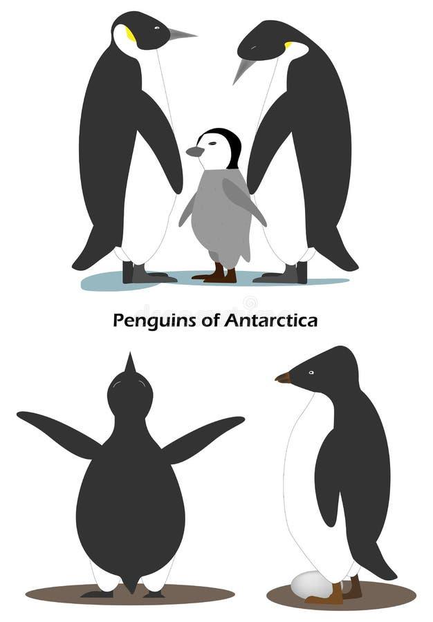 De pinguïn Aptenodytes is een familie met een welp Adeliae van pinguïnpygoscelis met ei Antarctische dieren stock foto