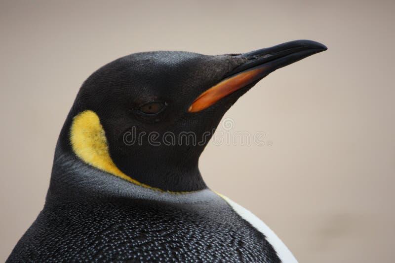 De Pinguïn die van de koning oplet stock foto