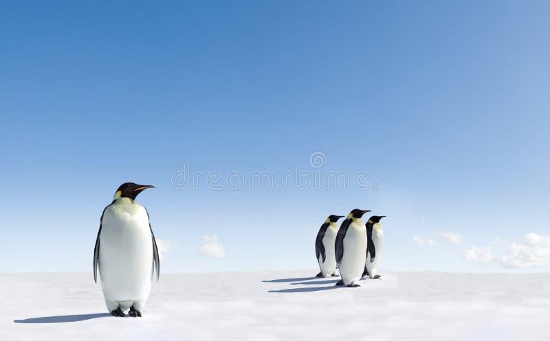 De pinguïnen van de keizer op ijs
