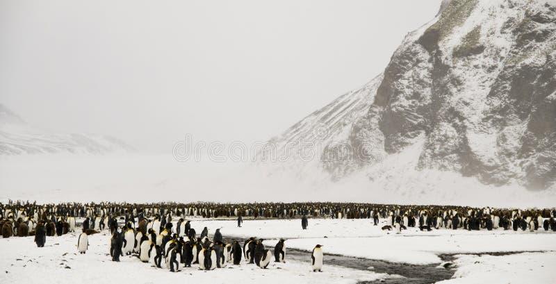 De Pinguïnen van de koning in een SneeuwSprookjesland stock foto