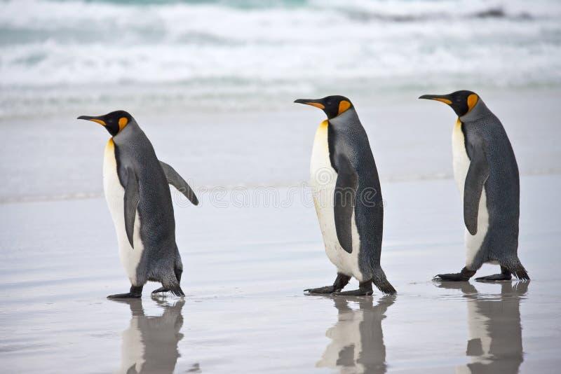 De Pinguïnen van de koning - Falkland Eilanden royalty-vrije stock foto