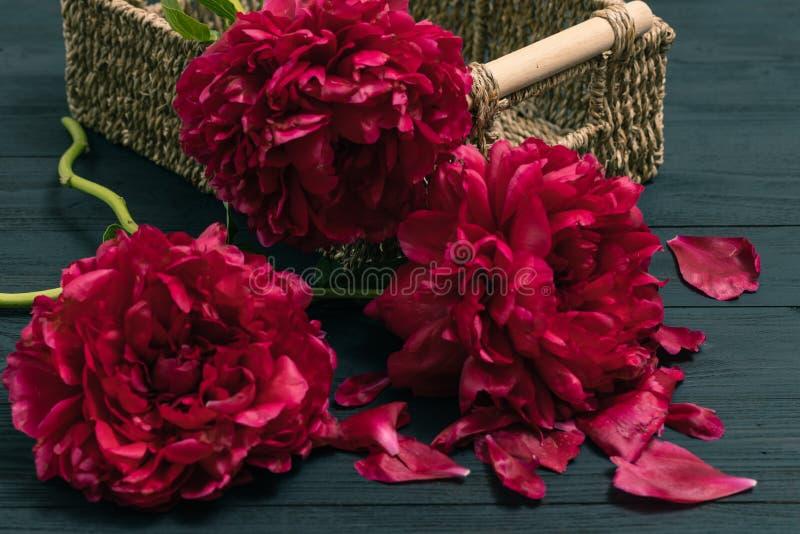 De pioen van de de lentebloem De gelukkige Dag van Moeders De groetenkaart van de moeder` s Dag De gift van de moederdag stock foto's