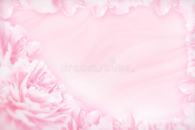 De pioenbloemen komen gevoelig blured kader tot bloei Ondiepe diepte De achtergrond van de groetkaart Abstracte achtergrond Zacht royalty-vrije stock fotografie