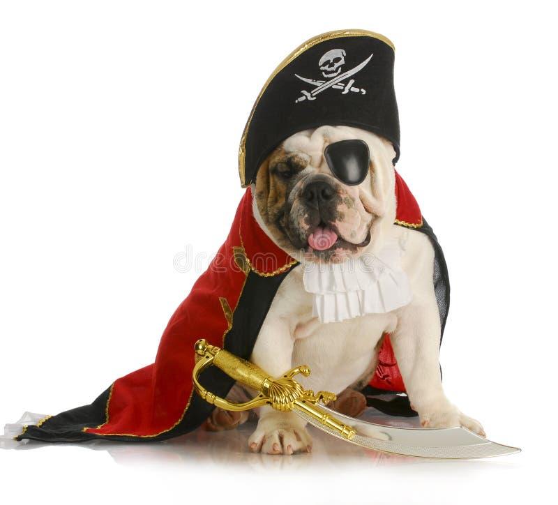 De piraat van de hond royalty-vrije stock fotografie