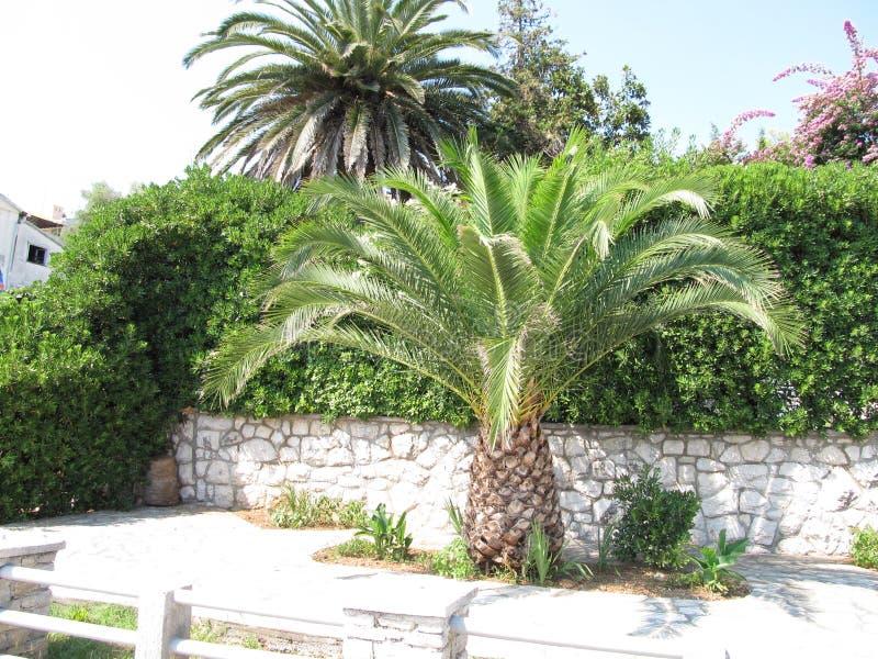 De plaat van de Palmasteen, Tivat, Montenegro stock afbeeldingen