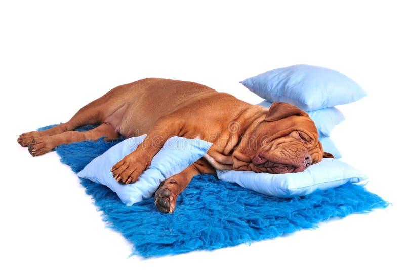 De Plaats van de hond royalty-vrije stock fotografie