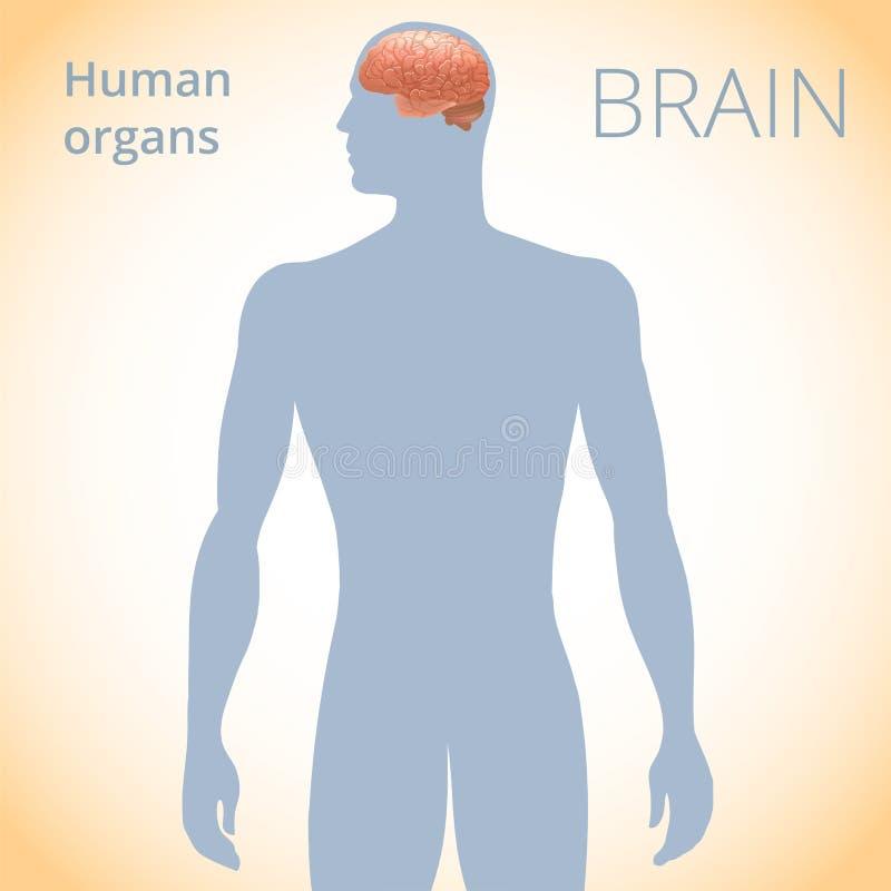 De plaats van de hersenen in het lichaam, het menselijke zenuwstelsel stock illustratie