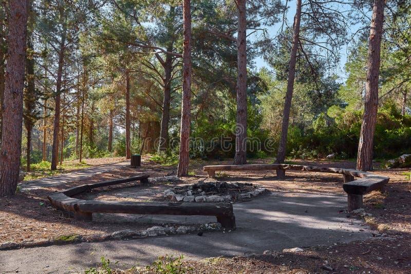 De plaats van de picknick in het bos royalty-vrije stock foto's