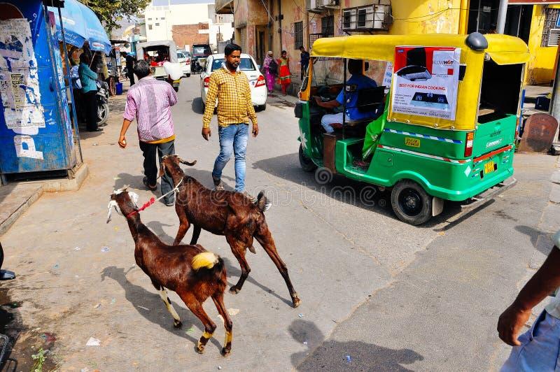De plaatselijke bewoners en de geiten lopen de straten van Jaipur, India royalty-vrije stock fotografie