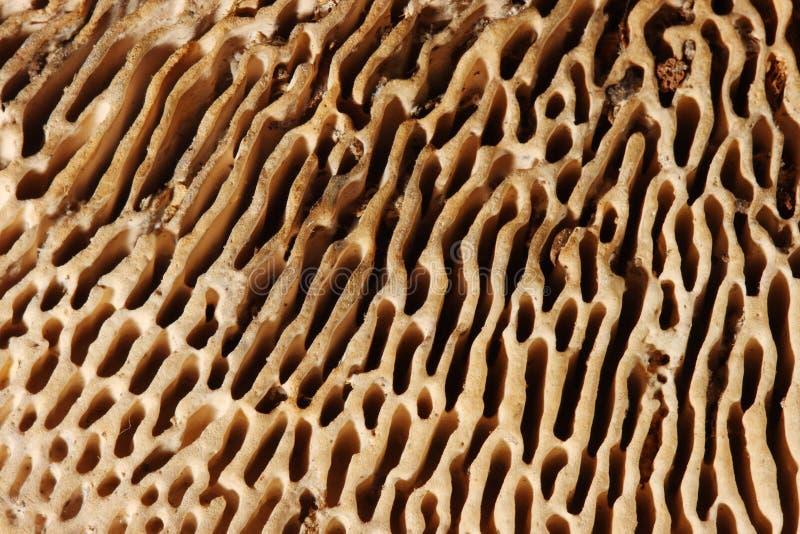 De plaatzwammacro van de textuur, paddestoel stock foto