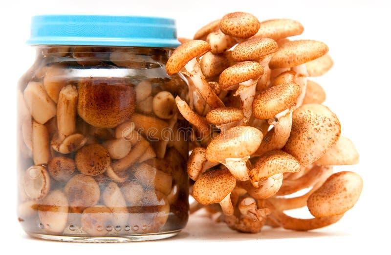 De plaatzwammen van de honing stock foto's
