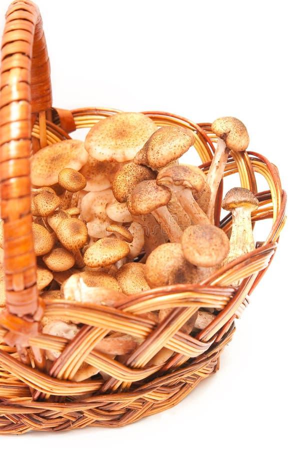 De plaatzwammen van de honing in een mand royalty-vrije stock foto