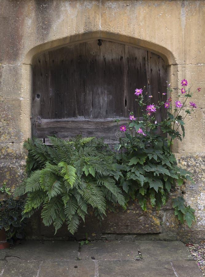 De planter van de Cotswoldsteen met varens en anemoon stock afbeelding