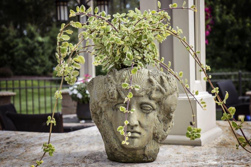 De Planter van de steenmislukking met Gesneden Standbeeldgezicht royalty-vrije stock foto