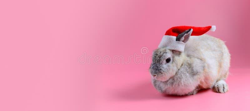 De pluizige bruine hoed van de Kerstman van de konijntjesslijtage zit op schone roze ruimte als achtergrond en exemplaar voor tek stock afbeelding
