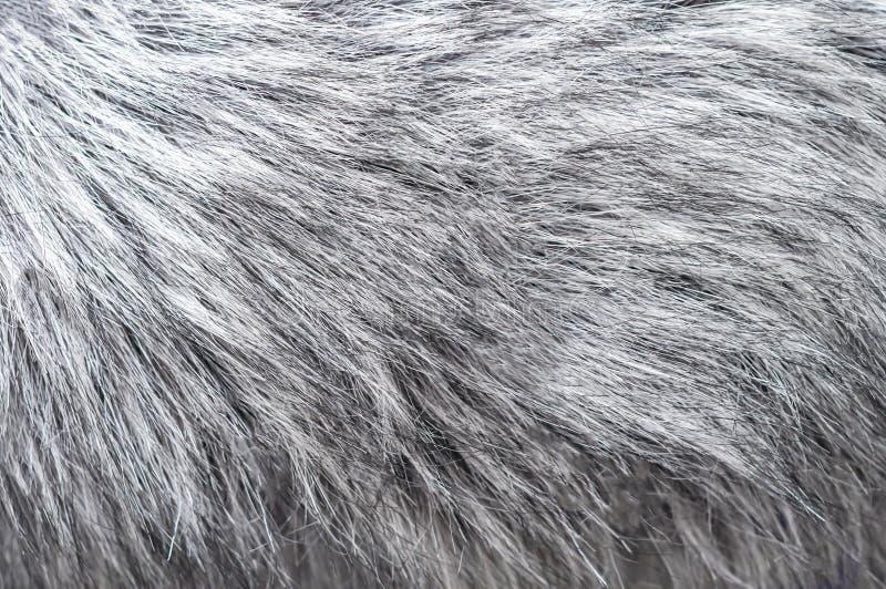 De pluizige zilveren achtergrond van het vosbont Textuur van de grijze foto van de bontclose-up royalty-vrije stock fotografie