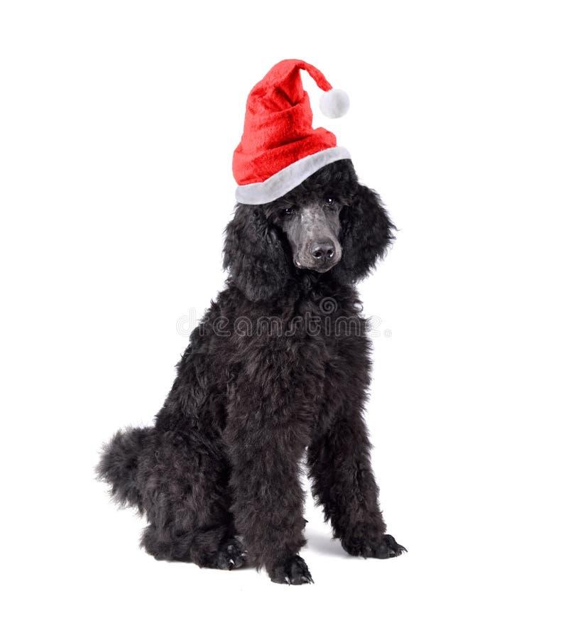 De poedel van het Kerstmispuppy stock afbeelding