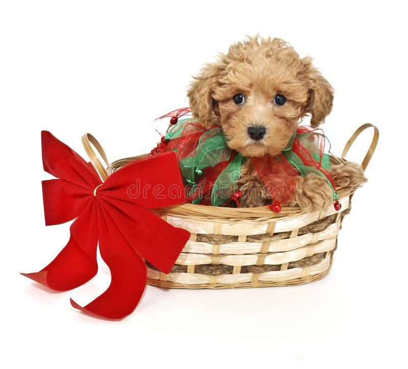 De Poedel van Kerstmis stock afbeelding