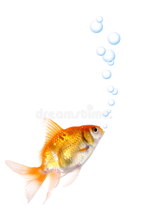 or de poissons images stock
