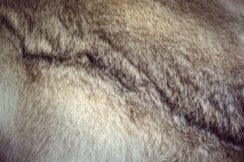 De polaire textuur van het vosbont voor achtergrond royalty-vrije stock foto