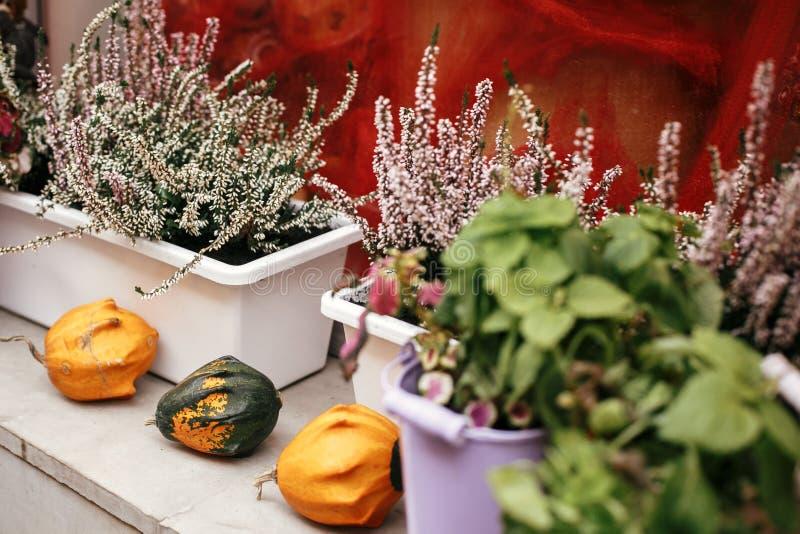 De pompoenen, pompoen en heide de bloemen in stadsstraat, vakantiedecoratie slaan voorzijden en gebouwen op Halloween-straatdecor stock fotografie