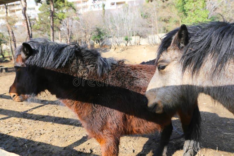 De poney van Nice stock afbeelding