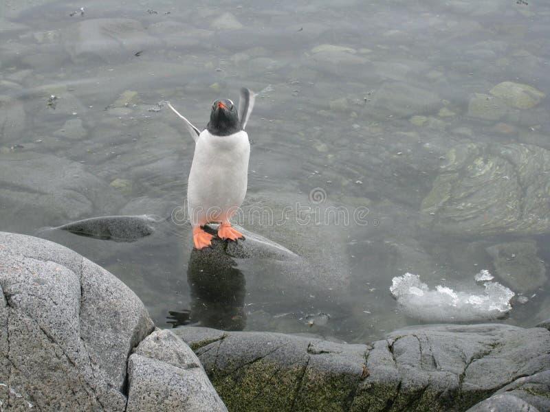 De pool van de pinguïn bij Haven Lockroy stock afbeelding