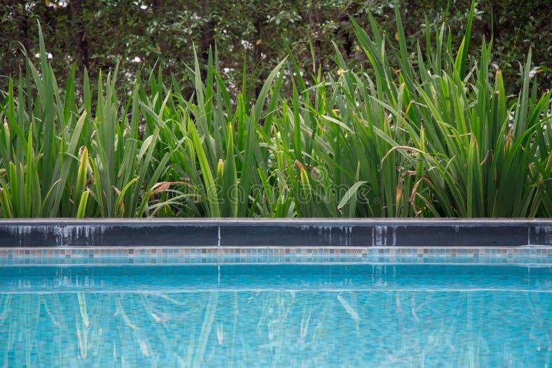 De poolpartij plant mening bij luxehotel met aardige groene installaties naast het ondiepe blauwe water Pool zijweerspiegelingen  royalty-vrije stock foto's