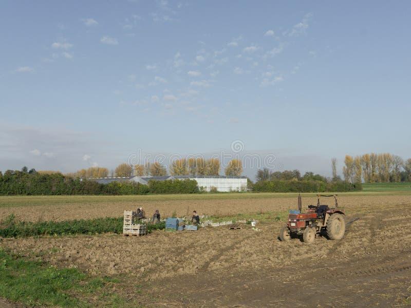 De Poolse landbouwers werken op de plantaardige gebieden stock fotografie