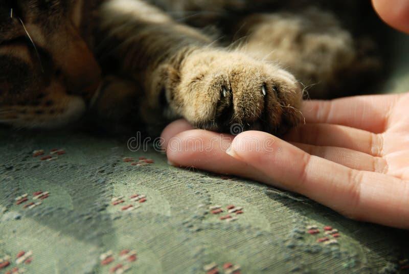 De poot van de kat op menselijke hand stock afbeelding