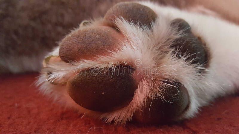 De poot van honden royalty-vrije stock foto's