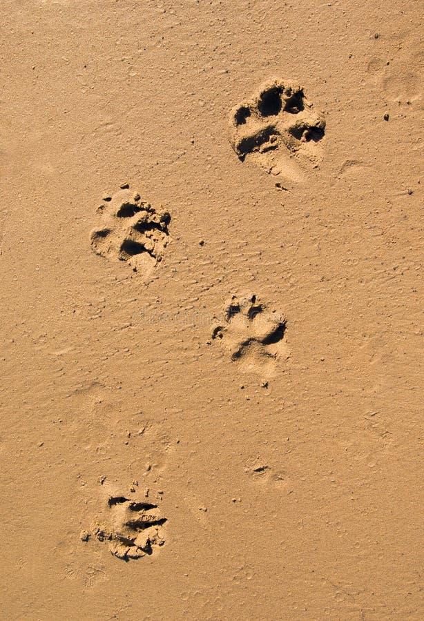 De pootaf:drukken van de hond in het strandzand royalty-vrije stock afbeelding