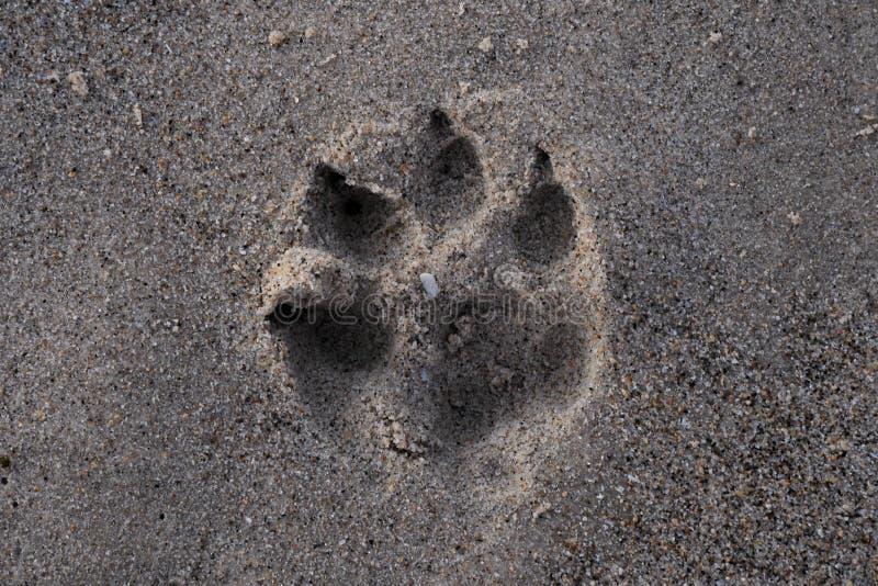 De pootaf:drukken van de hond in het zand royalty-vrije stock foto