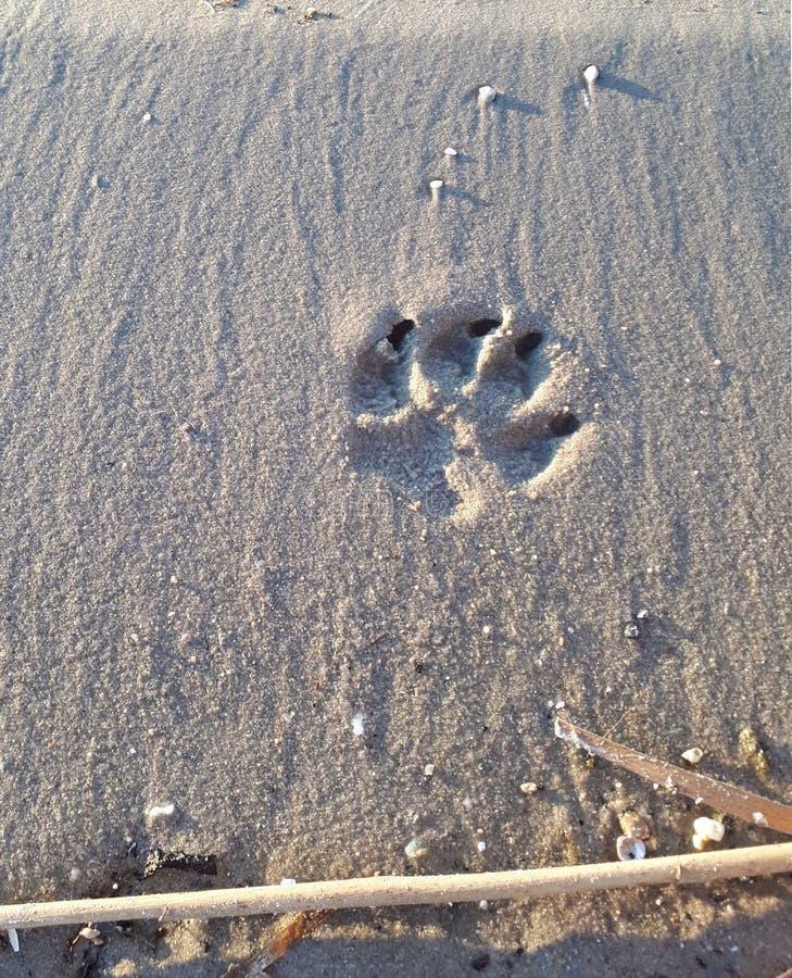 De pootdruk van de hond in het zand stock foto