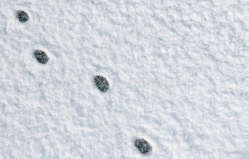 De pootvoetafdrukken van de kat in de sneeuw stock foto