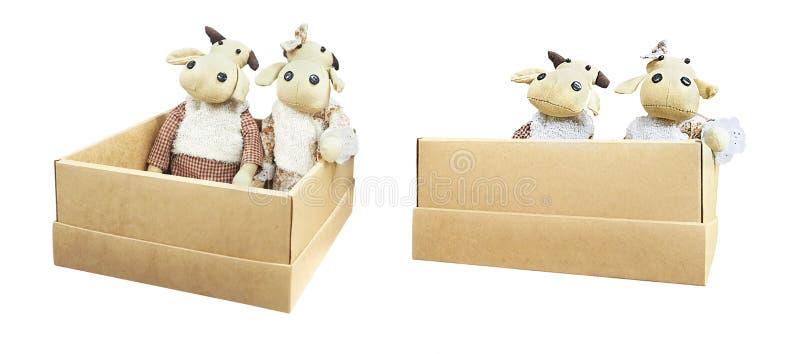 De poppen van de buffelsbaby in doos stock foto