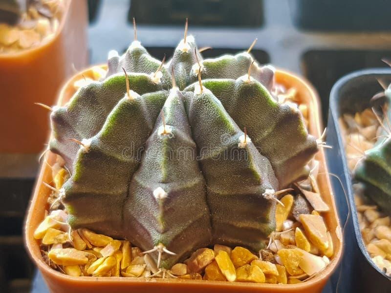 De populaire binneninstallatieselementen en succulents de rozettenverscheidenheden met inbegrip van speld beschermen cactus reali royalty-vrije stock afbeelding