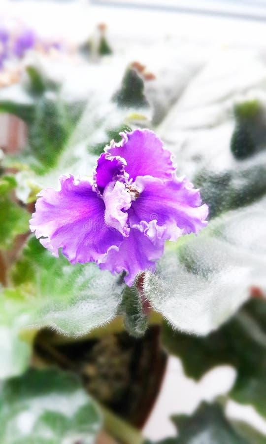 De pot bloeit mooi royalty-vrije stock foto