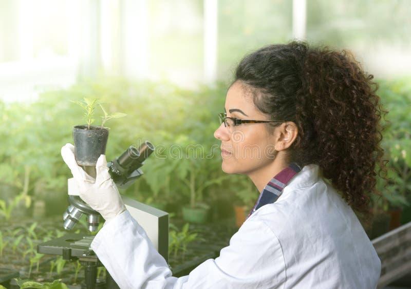 De pot van de biologenholding met spruit stock afbeeldingen