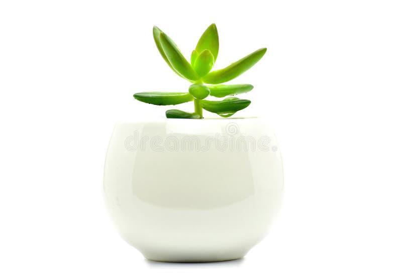 De pot van de cactusinstallatie isoleert voor decoratie en interia stock afbeelding