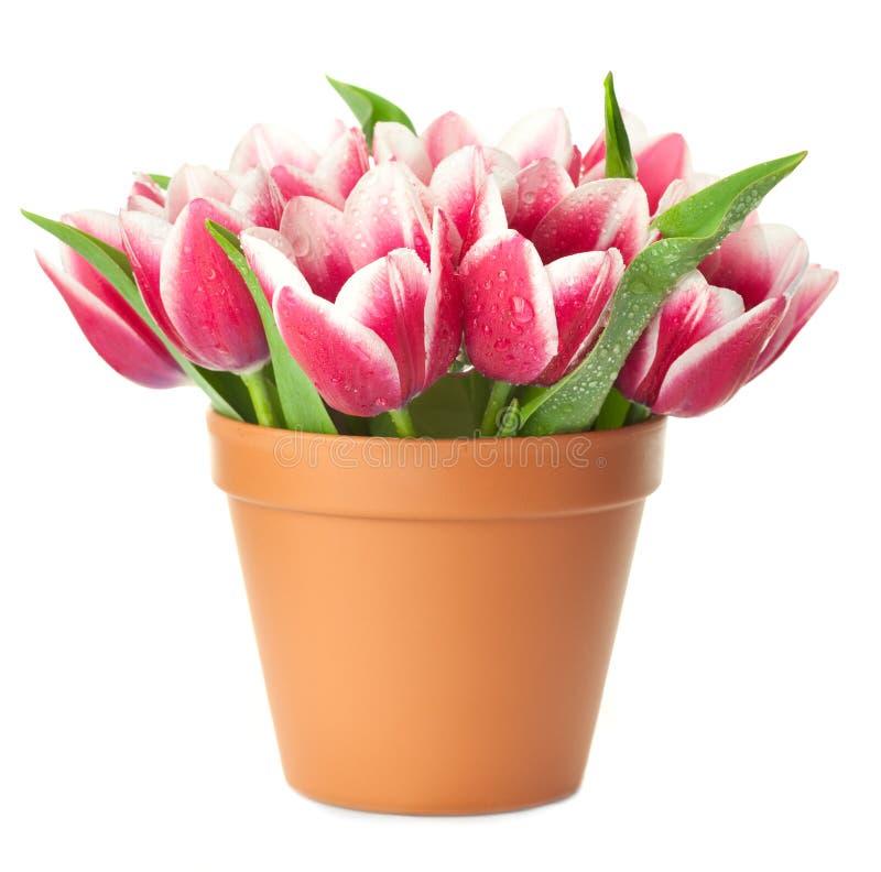 De Pot van de bloem met roze Tulpen royalty-vrije stock foto